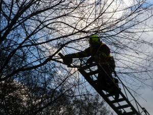 Odstranění stromů - 11.2.2016