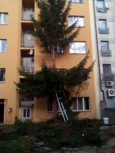 Odstranění vzrostlého stromu - 24.2.2016