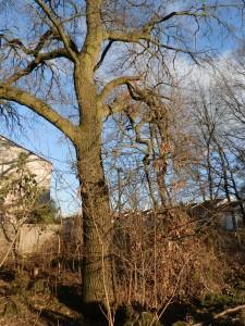 Odstranění pádem hrozící větve - 24.2.2016b
