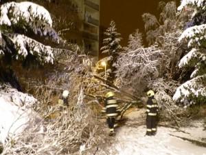Odstranění padlého stromu - 29.2.2016a