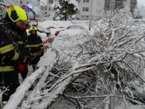 Odstranění stromu z vozidel - 1.3.2016