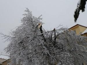 Odstranění části stromu - 1.3.2016