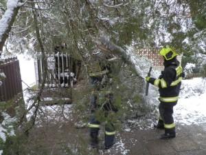 Odstranění zlomeného stromu - 1.3.2016