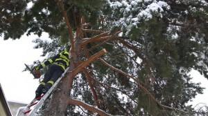 Odstranění větve stromu - 1.3.2016